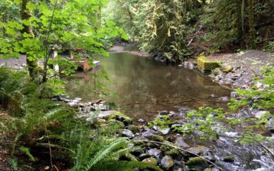 Goldstream River in September  Photo